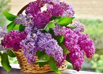 lilac basket